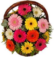 Sepet içerisinde sicak sevgi çiçekleri  Ankara Anadolu hediye çiçek yolla