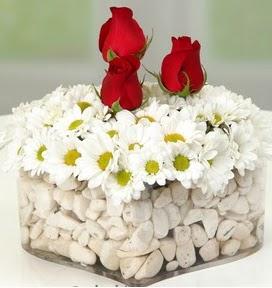 Mika kalpte papatyalar ve 3 gül  Ankara Anadolu çiçekçi telefonları