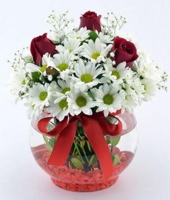 Fanusta 3 Gül ve Papatya  Ankara Anadolu internetten çiçek satışı