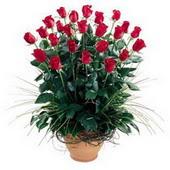 Ankara Anadolu uluslararası çiçek gönderme  10 adet kirmizi gül cam yada mika vazo