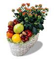 Ankara Anadolu Anadolu İnternetten çiçek siparişi  meyva sepeti ve kalanche