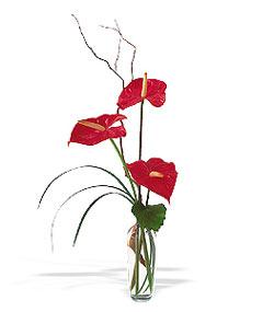 Ankara Anadolu çiçek siparişi sitesi  cam yada mika Vazoda 3 adet  antoryum