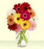 Ankara Anadolu çiçek yolla , çiçek gönder , çiçekçi   cam yada mika vazoda 15 özel gerbera