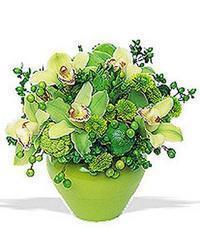 cam yada mika vazoda 5 adet orkide   Ankara Anadolu online çiçekçi , çiçek siparişi