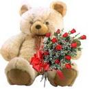 kocaman ayicik ve 10 gül   Ankara Anadolu çiçek , çiçekçi , çiçekçilik