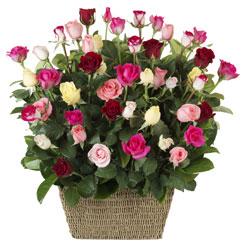 41 adet karisik gül sepeti   Ankara Anadolu çiçek siparişi vermek