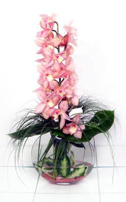 Ankara Anadolu internetten çiçek siparişi  cam içerisinde tek dal orkide