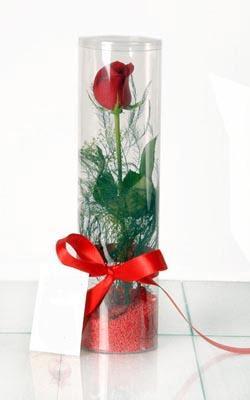 Ankara Anadolu çiçek yolla  Silindir vazoda tek kirmizi gül