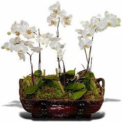 Ankara Anadolu çiçek , çiçekçi , çiçekçilik  Sepet içerisinde saksi canli 3 adet orkide