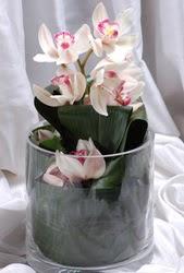 Ankara Anadolu internetten çiçek siparişi  Cam yada mika vazo içerisinde tek dal orkide