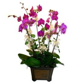 Ankara Anadolu cicek , cicekci  4 adet orkide çiçegi