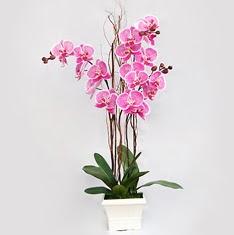 Ankara Anadolu cicekciler , cicek siparisi  2 adet orkide - 2 dal orkide