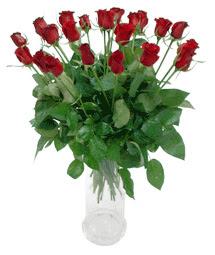 Ankara Anadolu çiçekçi telefonları  11 adet kimizi gülün ihtisami cam yada mika vazo modeli