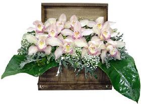 Ankara Anadolu ucuz çiçek gönder  sandik içerisinde 1 dal orkide