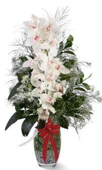 Ankara Anadolu çiçek siparişi sitesi  cam içerisinde 1 dal orkide çiçegi