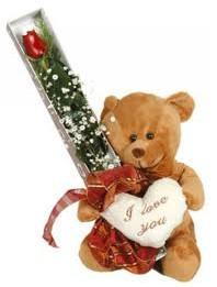 15 cm ayicik ve tek kutu gül  Ankara Anadolu uluslararası çiçek gönderme