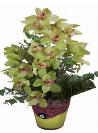Ankara Anadolu 14 şubat sevgililer günü çiçek  cam vazo içerisinde 2 dal orkide çiçegi