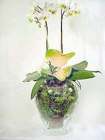 Ankara Anadolu çiçek satışı  Cam yada mika vazoda özel orkideler