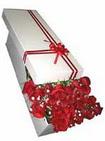 Ankara Anadolu çiçekçi telefonları  11 adet 1.kalite magnum güller