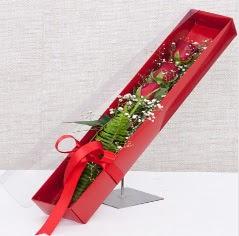 Kutu içerisinde 3 adet kırmızı gül  Ankara Anadolu online çiçek gönderme sipariş