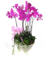 9 dal orkide saksı çiçeği  Ankara Anadolu güvenli kaliteli hızlı çiçek