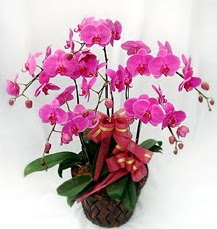 6 Dallı mor orkide çiçeği  Ankara Anadolu anneler günü çiçek yolla
