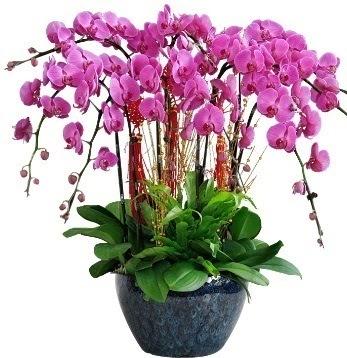 9 dallı mor orkide  Ankara Anadolu 14 şubat sevgililer günü çiçek