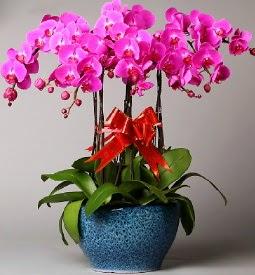 7 dallı mor orkide  Ankara Anadolu çiçek online çiçek siparişi