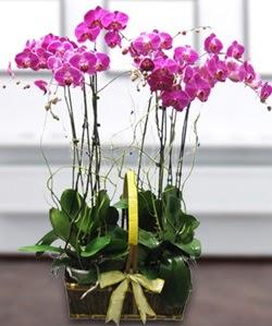 4 dallı mor orkide  Ankara Anadolu güvenli kaliteli hızlı çiçek