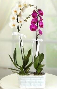 1 mor 1 dal beyaz İthal orkide sepet içerisinde  Ankara Anadolu çiçek mağazası , çiçekçi adresleri