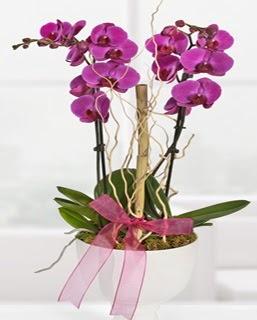 2 dallı nmor orkide  Ankara Anadolu anneler günü çiçek yolla
