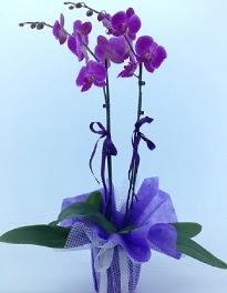 2 dallı mor orkide  Ankara Anadolu kaliteli taze ve ucuz çiçekler