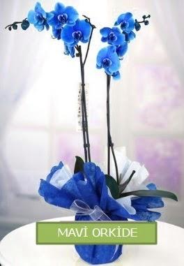 2 dallı mavi orkide  Ankara Anadolu çiçekçiler