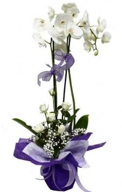 2 dallı beyaz orkide 5 adet beyaz gül  Ankara Anadolu çiçekçi mağazası