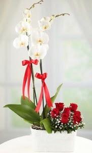 2 dallı beyaz orkide ve 7 kırmızı gül  Ankara Anadolu hediye çiçek yolla