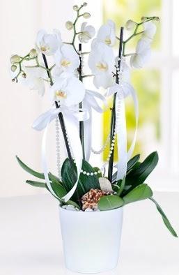 3 dallı beyaz orkide  Ankara Anadolu çiçek yolla