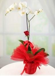 Tek dal beyaz orkide tek dal kırmızı gül  Ankara Anadolu internetten çiçek satışı
