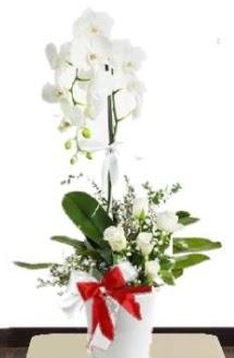 Tek dallı beyaz orkide 5 beyaz gül  Ankara Anadolu çiçek siparişi sitesi