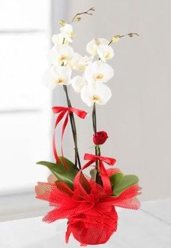 2 dallı beyaz orkide ve 1 adet kırmızı gül  Ankara Anadolu anneler günü çiçek yolla