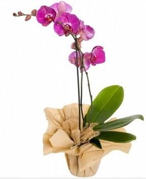 Tek dal mor orkide  Ankara Anadolu çiçek gönderme sitemiz güvenlidir