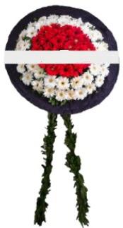 mozele çiçeği  Ankara Anadolu hediye sevgilime hediye çiçek