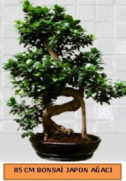 85 CM Japon ağacı Bonsai saksı bitkisi  Ankara Anadolu ucuz çiçek gönder