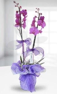 Çift dallı mor orkide LİKE MARKADIR  Ankara Anadolu anneler günü çiçek yolla
