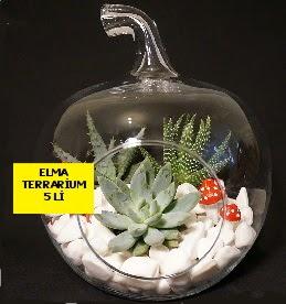 5 kaktüslü Elma terrarium orta boy  Ankara Anadolu online çiçek gönderme sipariş