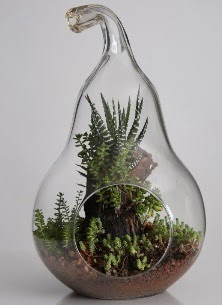 Armut cam küçük boy terrarium  Ankara Anadolu çiçek servisi , çiçekçi adresleri
