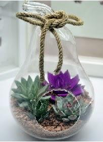 Orta boy armut 3 kaktüs terrarium  Ankara Anadolu internetten çiçek satışı