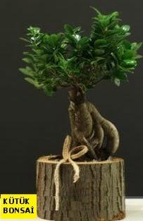 Kütük içerisinde Bonsai japon ağacı  Ankara Anadolu internetten çiçek siparişi