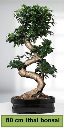 80 cm özel saksıda bonsai bitkisi  Ankara Anadolu çiçekçi telefonları