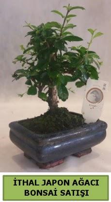 İthal japon ağacı bonsai bitkisi satışı  Ankara Anadolu çiçekçi telefonları