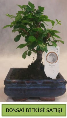 Bonsai ithal görsel minyatür japon ağacı  Ankara Anadolu ucuz çiçek gönder